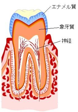 虫歯のない状態